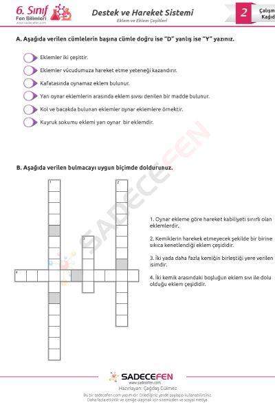 6. Sınıf Fen Bilimleri Eklem ve Eklem Çeşitleri Çalışma Kağıdı