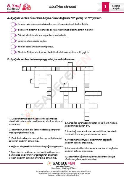 6. Sınıf Fen Bilimleri Sindirim Sistemi Çalışma Kağıtları – 2 Adet
