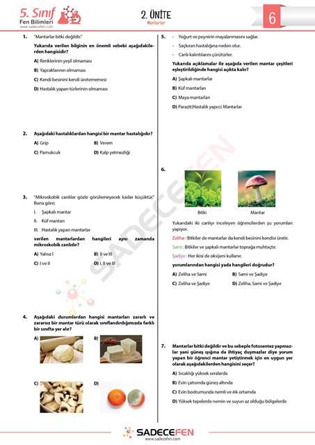 5. Sınıf Fen Bilimleri Mantarlar Testi 1