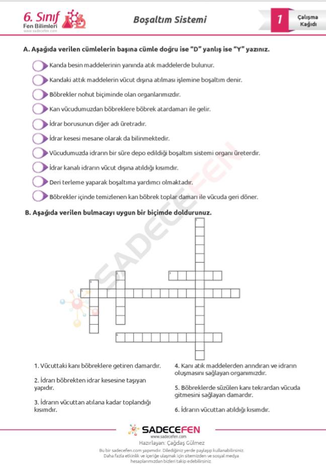6. Sınıf Fen Bilimleri Boşaltım Sistemi Çalışma Kağıdı 1