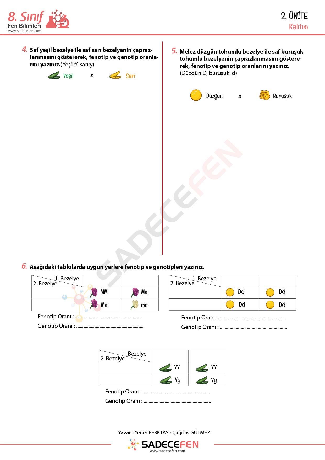 8. Sınıf LGS – Kalıtım Çalışma Kağıdı PDF İndir